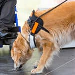 The Top 8 Types Of Service Dogs And How They Are Used