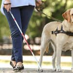 What Makes the Labradoodle A Great Service Dog?