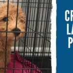 How To Crate Train a Labradoodle Puppy Like a Pro