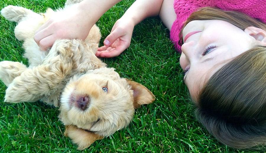Labradoodle Puppy Biting