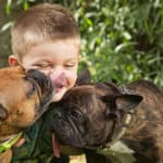 Are French Bulldogs Good For Families With Kids?