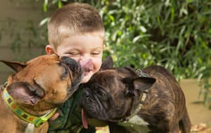 Are French Bulldogs Good For Families With Kids