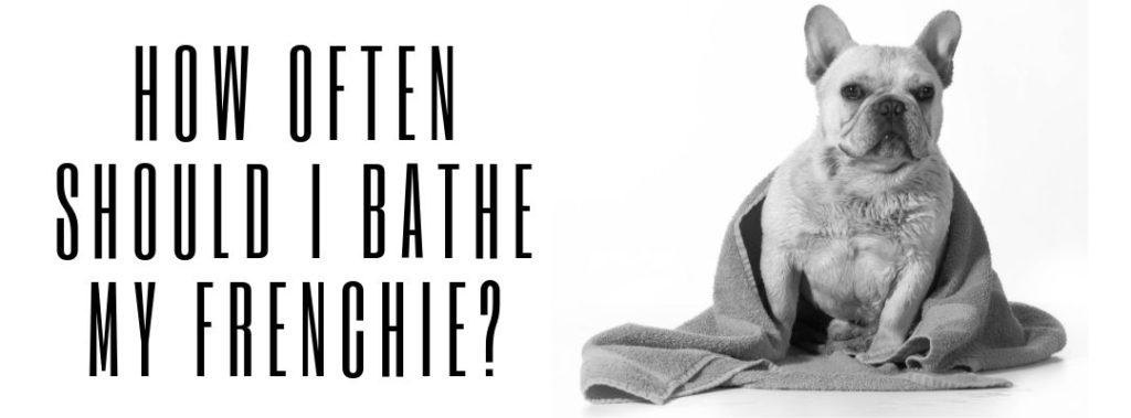 How Often Should I Bathe My Frenchie?