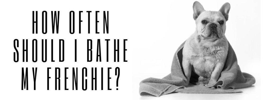 How Often Should I Bathe My Frenchie?