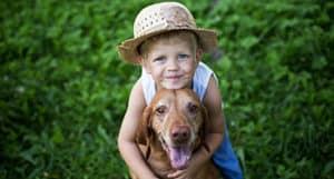 Is A Vizsla A Good Family Dog?