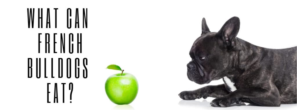 What Can French Bulldogs Eat?