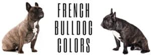 What Colors Do French Bulldogs Come In