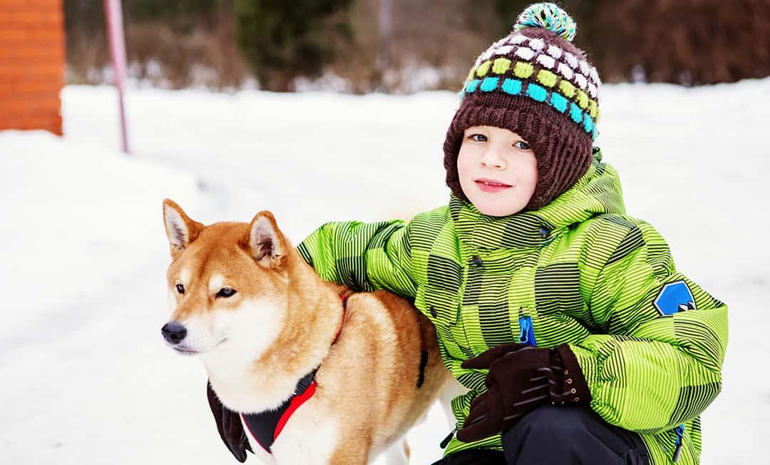Is A Shiba Inu A Good Family Dog?