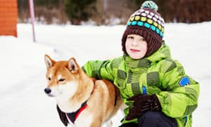 Is A Shiba Inu A Good Family Dog?