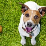Best Way To Get Rid Of Dog Poop: Simple, Smell Free Solution