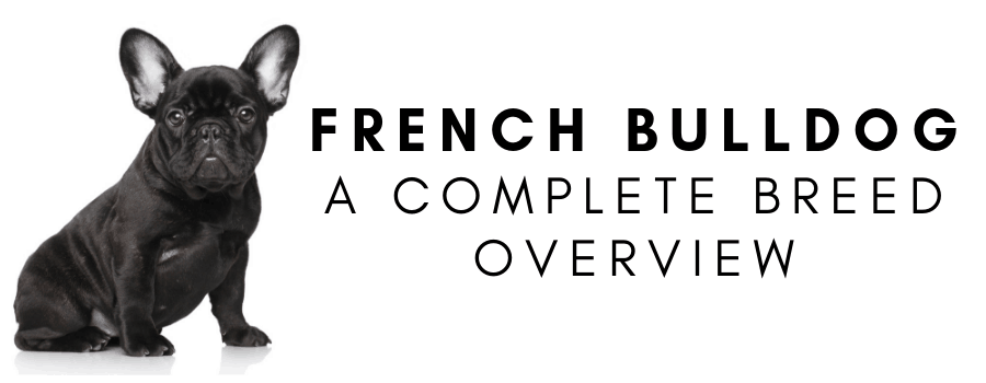 French Bulldog Complete Breed Overview