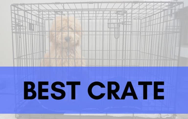 Best Crate_Trending Breeds
