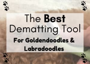 The Best Dematting Tool for Goldendoodles and Labradoodles