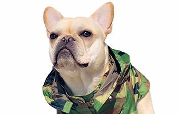 Crush the French Bulldog_crush_the_frenchie