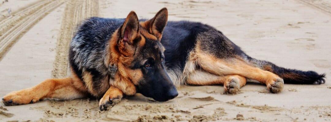 Best Dog Bed for German Shepherds