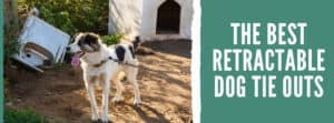 The Best Retractable Dog Tie Outs