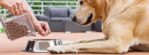 Best High Fiber Dog Food for Anal Gland Problems