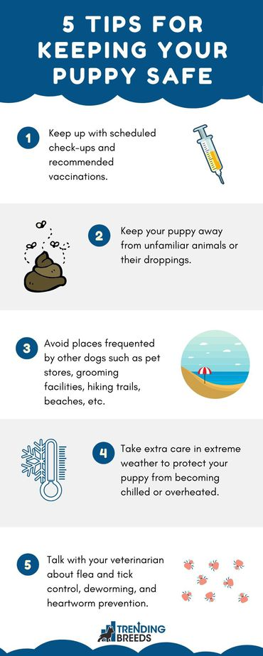 Infographic showing 5 of the top ways to keep a new puppy safe