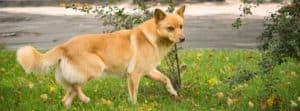 A stray dog wandering around the neighborhood