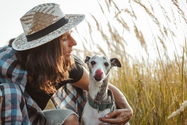 Whippet sitting with its owner in a field