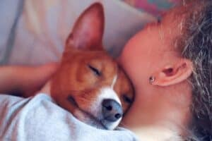Basenji cuddling with new owner