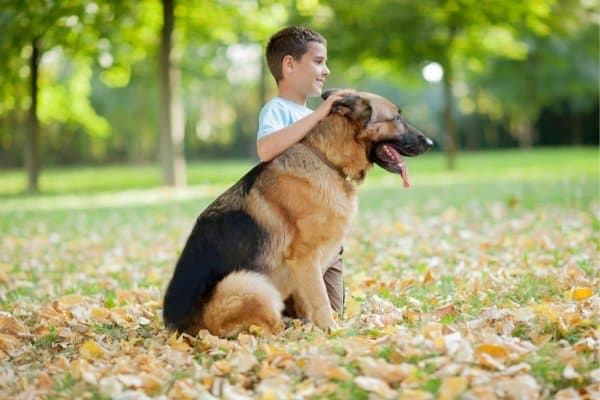 Young boy with his German Shepherd