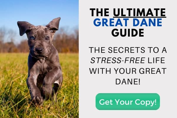 The Ultimate Great Dane Guide