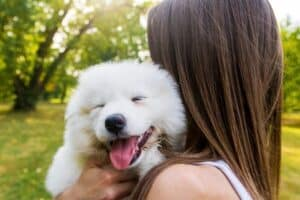 Smiling Samoyed puppy snuggling on woman's shoulder.