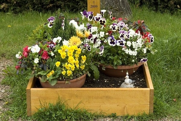 A dog's grave marked with several pots of flowers.