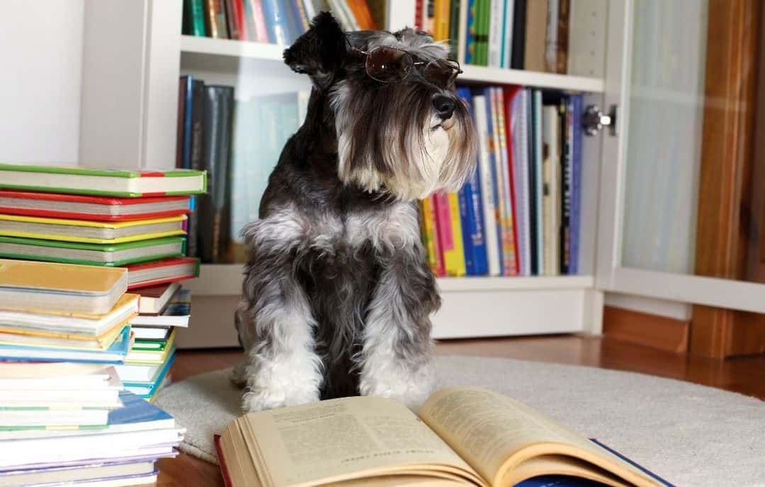 Best Dog Books
