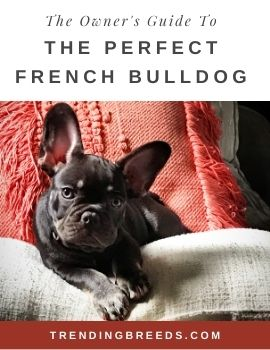 The Owner's Guide To The Perfect French Bulldog-Cover