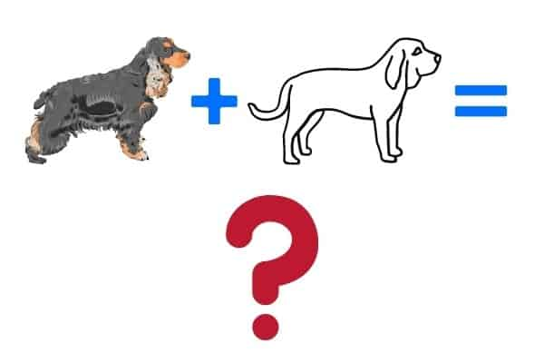 A graphic depicting a Cocker Spaniel plus a mystery dog equals a question mark.