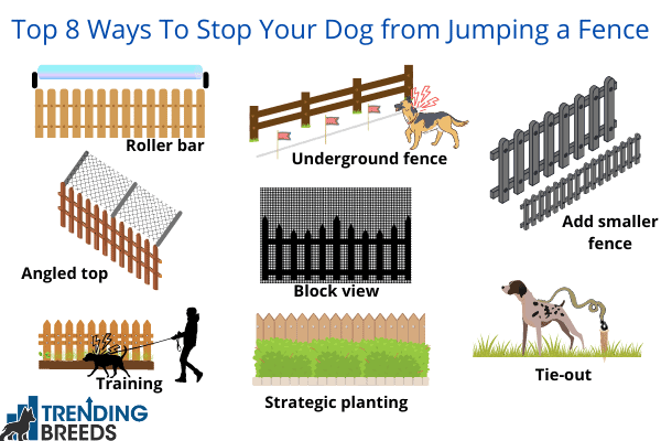 Graphic showing 8 way to prevent dog from jumping over a fence
