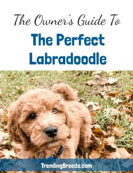 Labradoodle eBook Cover - Low Res