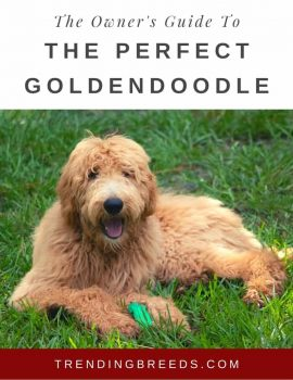 The Owner's Guide To The Perfect Goldendoodle Cover